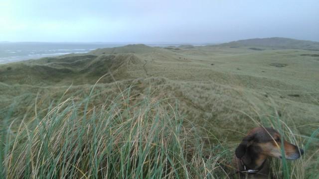 Strandhill dunes